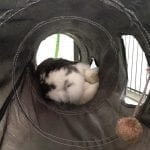 Sleeping bunny 2