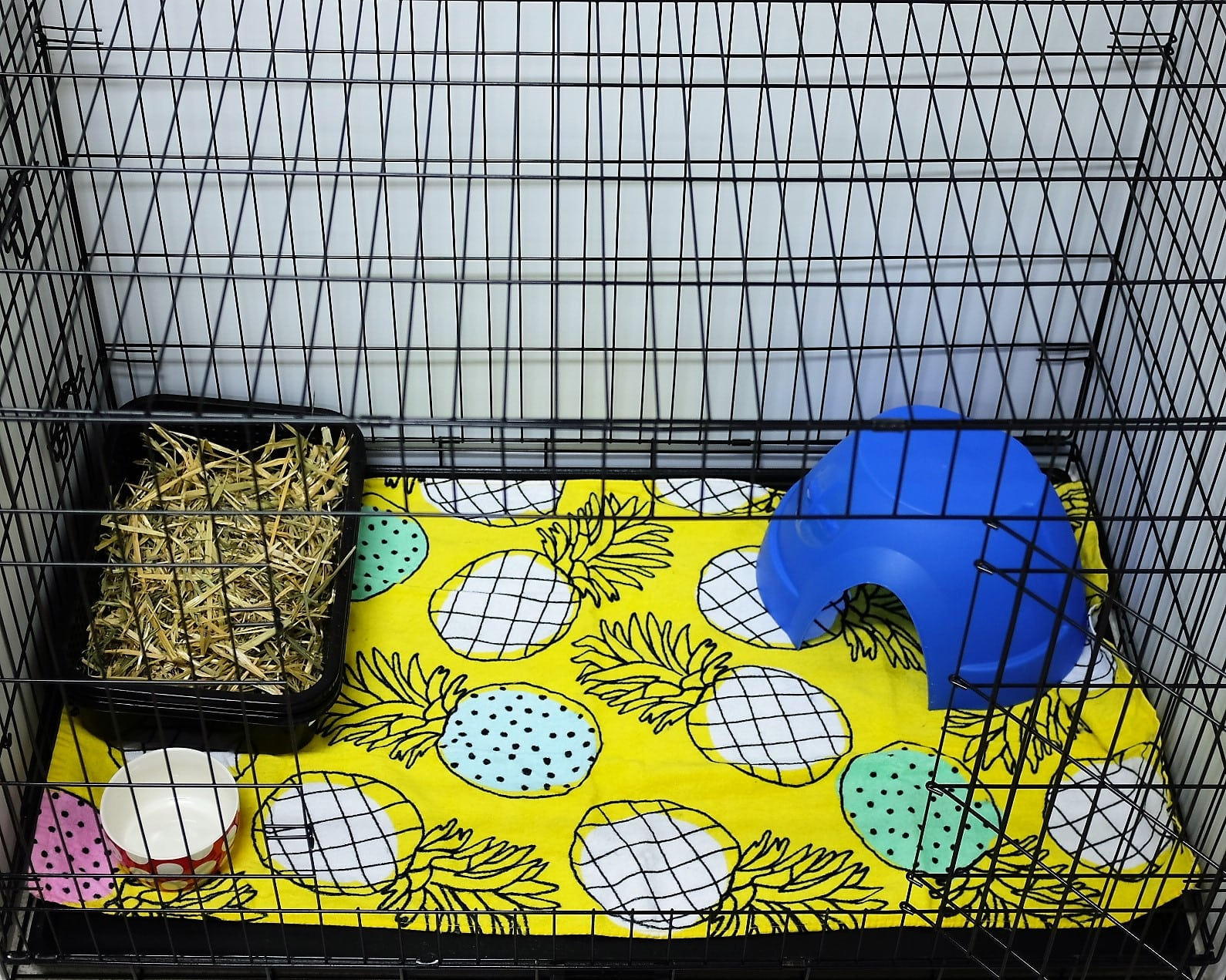 Cage - Bunny Accommodation Melbourne