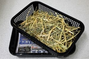 A basket of hay for our bunny guests