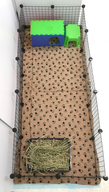 C&C grids style pet accommodation at our guinea pig boarding hotel