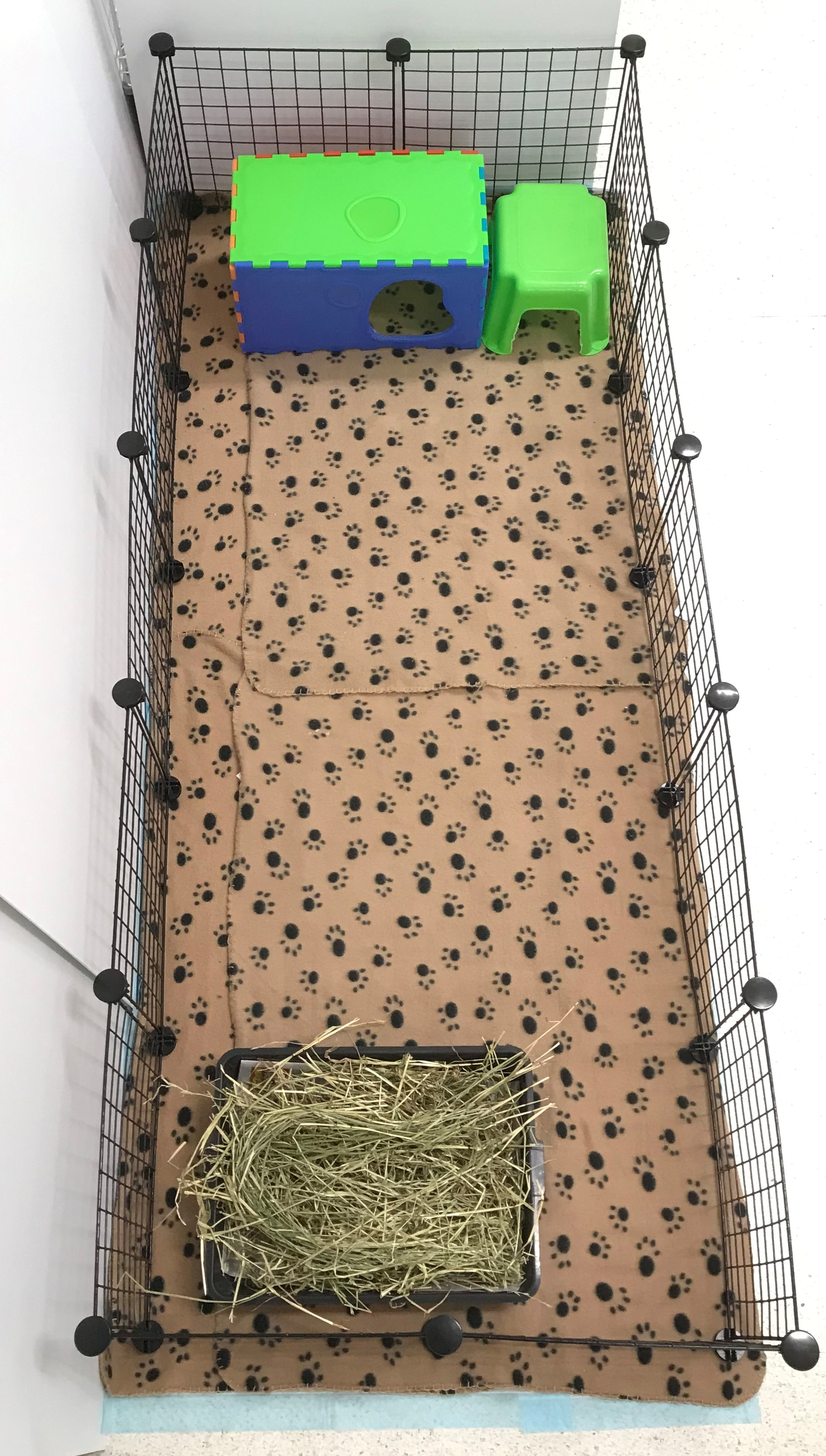 Indoor Guinea Pig Boarding Melbourne - C&C Pen